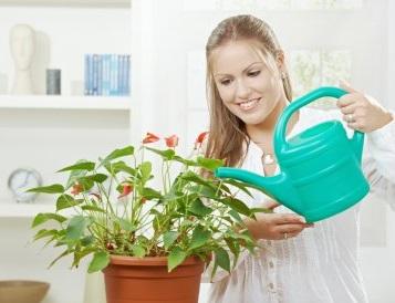 Cuidados b sicos de las plantas de interior - Cuidados de una hortensia ...