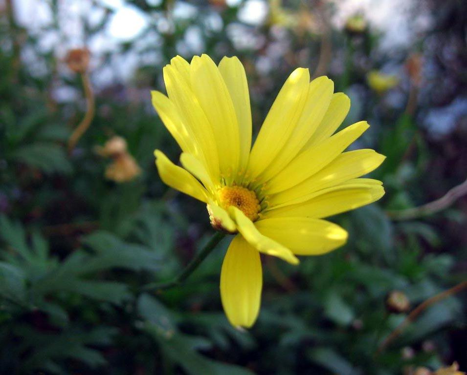 Fertilizaci n de las plantas de interior crecimiento de for Abono para plantas de interior