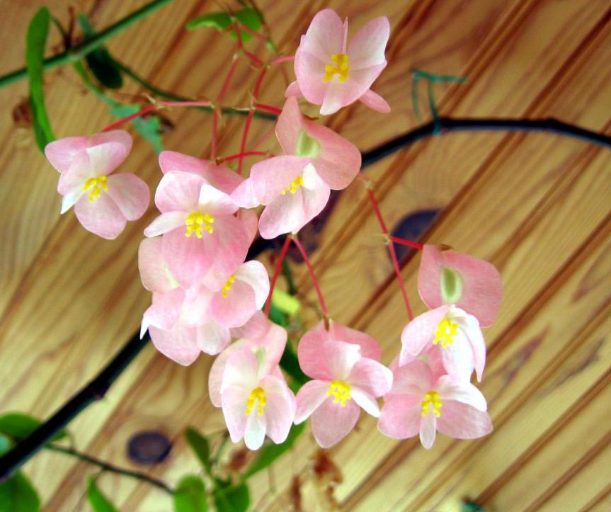 H medad de las plantas cuidados de las plantas de interior - Cuidado de plantas de interior ...