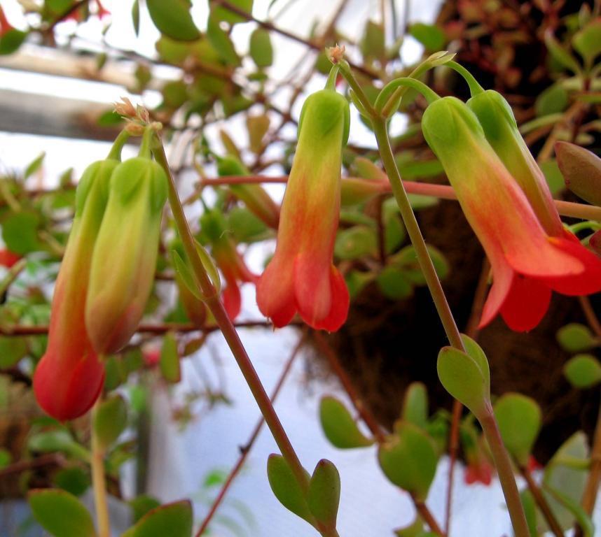 Plantas de Interior | Cuidado de Plantas