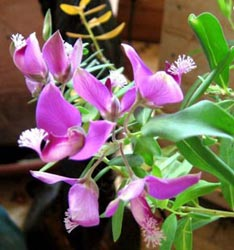 http://www.webplantas.com/images/cuidados-plantas-interior-temperatura-h.jpg