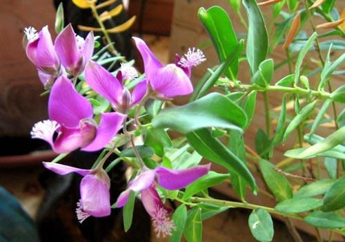 Temperatura de las plantas consejos de cuidados de plantas - Plantas que aguantan temperaturas extremas ...