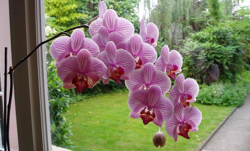 Trasplante de plantas de interior trasplantar plantas de for Cuidados orquideas interior