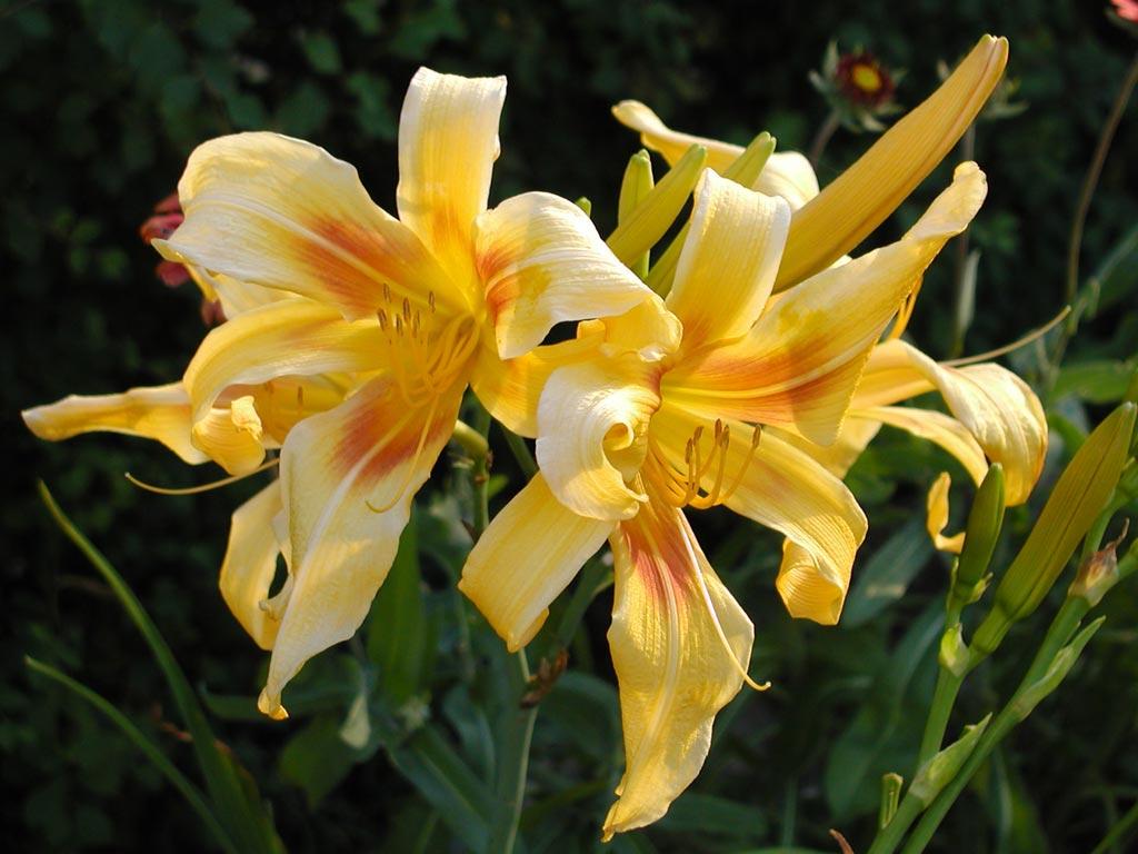 Fondos de pantalla de plantas y flores taringa