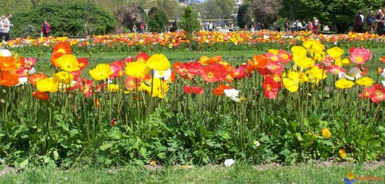 Biodiversidad las plantas for Tipos de plantas para jardin