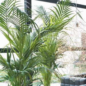 imagenes de plantas de interior: