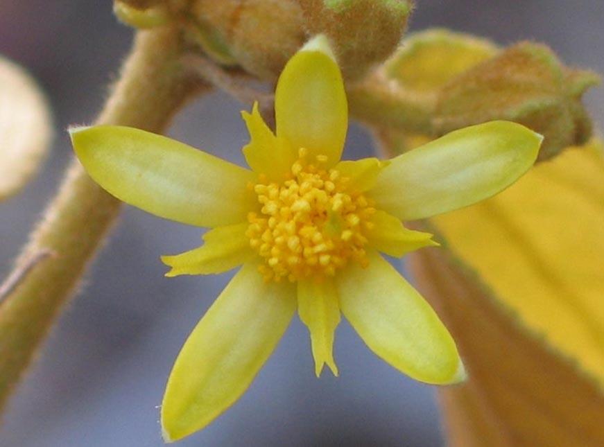 lena sari lo mejor plantas vasculares (cormofitos)