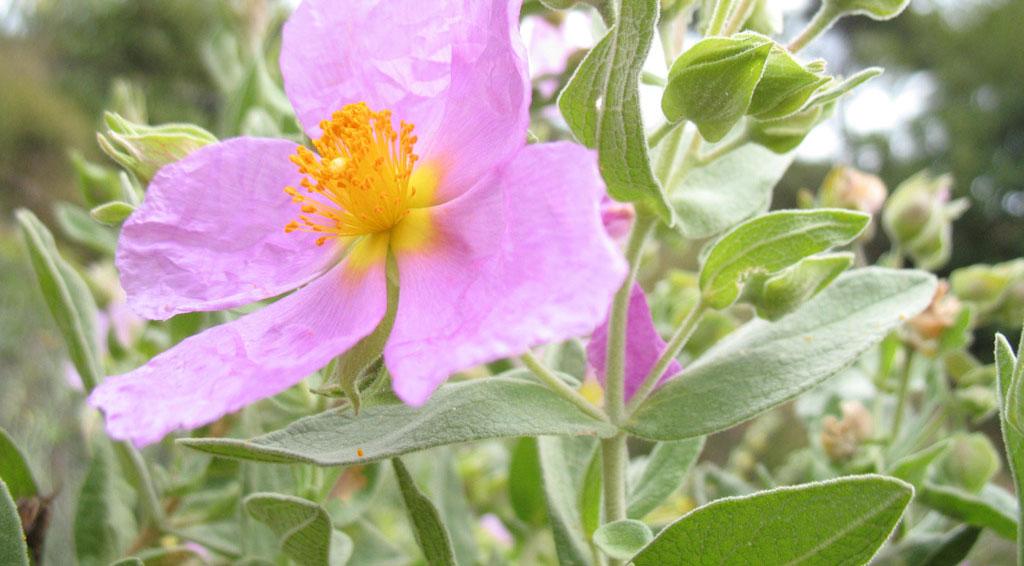 Plantas de interior Plantas medicinales Tipos de plantas y flores