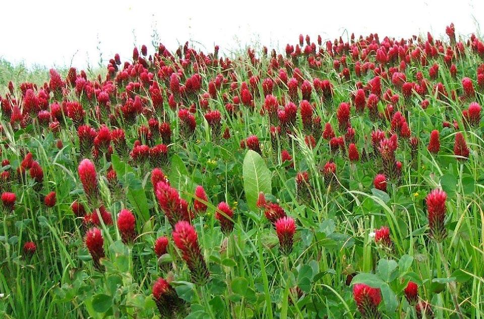 Plantas de interior plantas medicinales tipos de plantas - Plantas de interior tipos ...