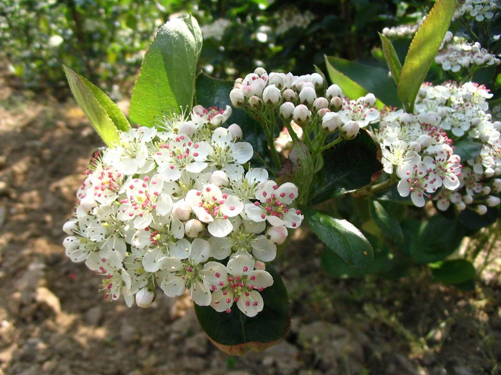 Fondos de pantalla de plantas y flores taringa for Arboles plantas y flores